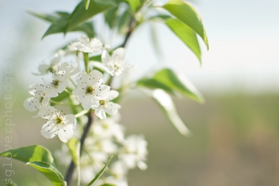 blossom01a