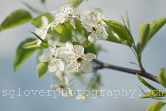 blossom06a