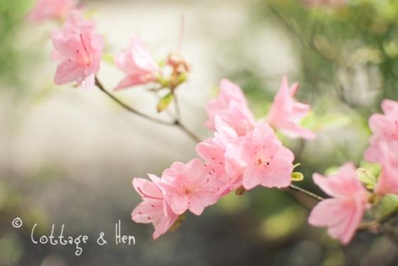 pink buds2