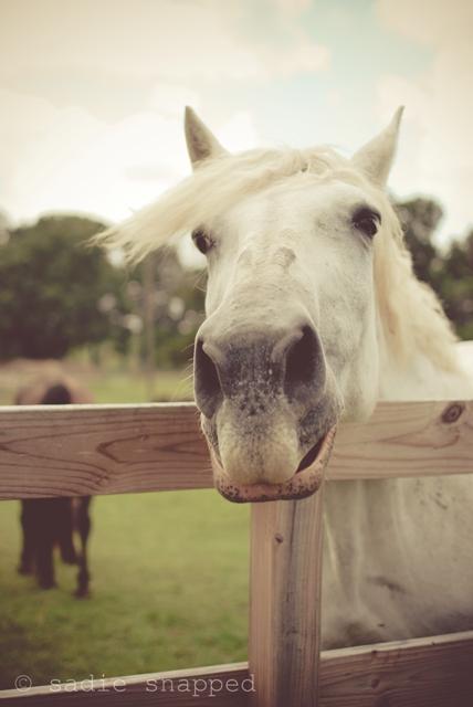 horses05