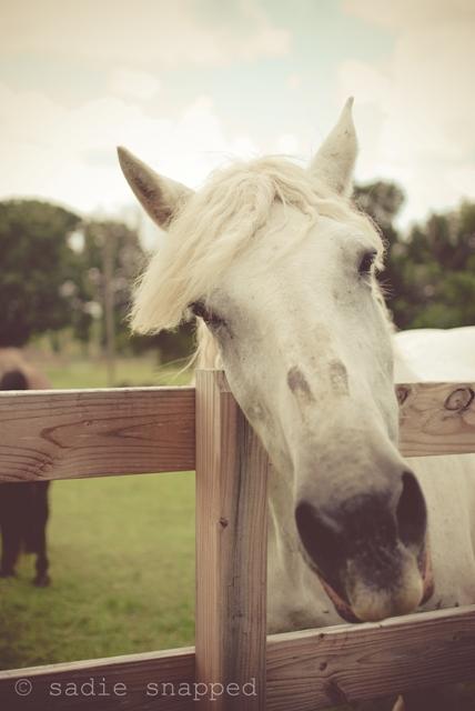 horses06