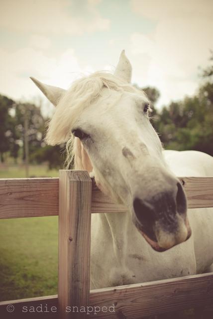 horses07